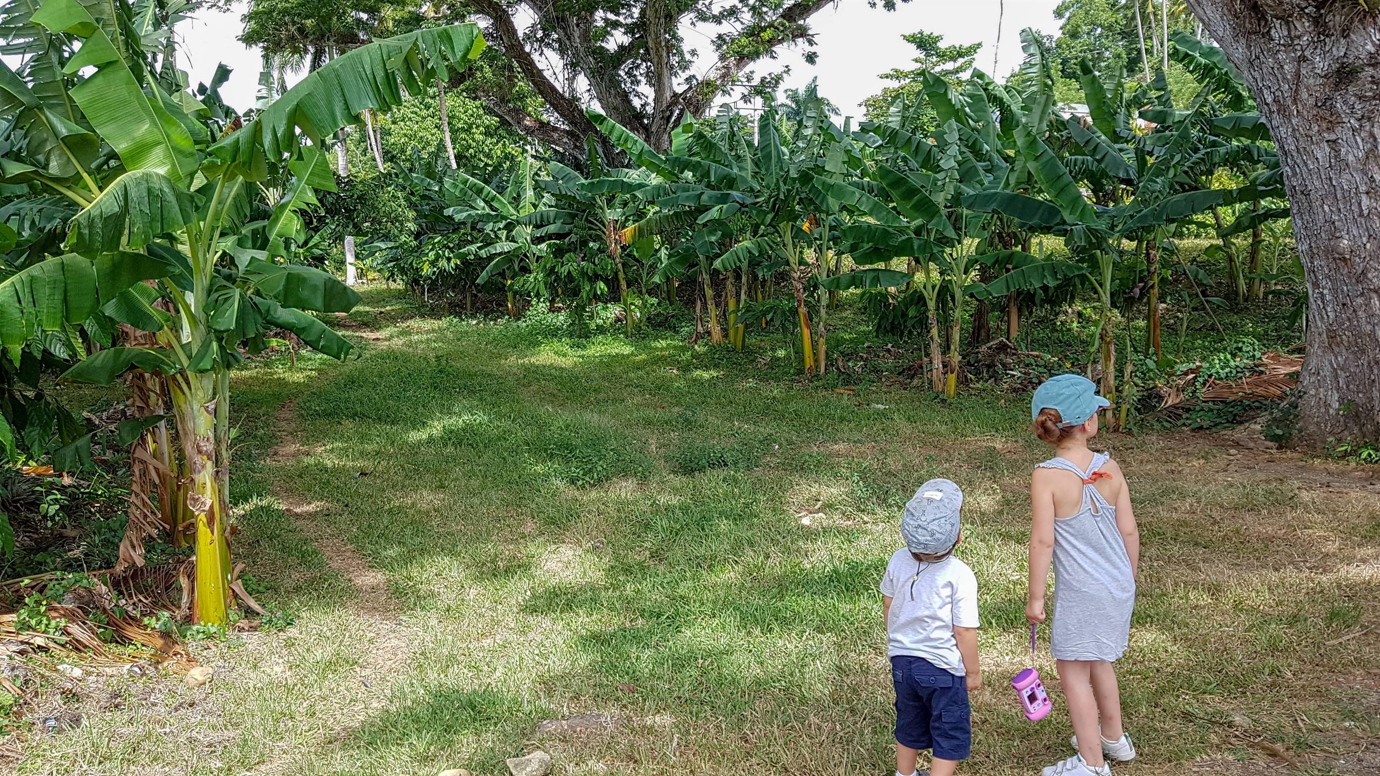 Plantation de Cacao, Baracoa, Cuba