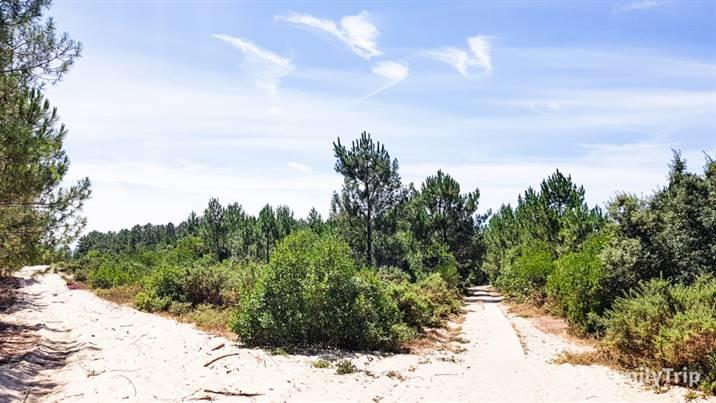 Reserve naturelle de l'étang de Cousseau